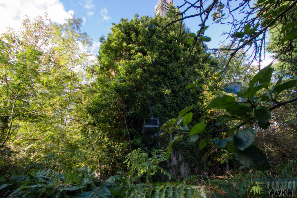 Overgrown House Doncaster