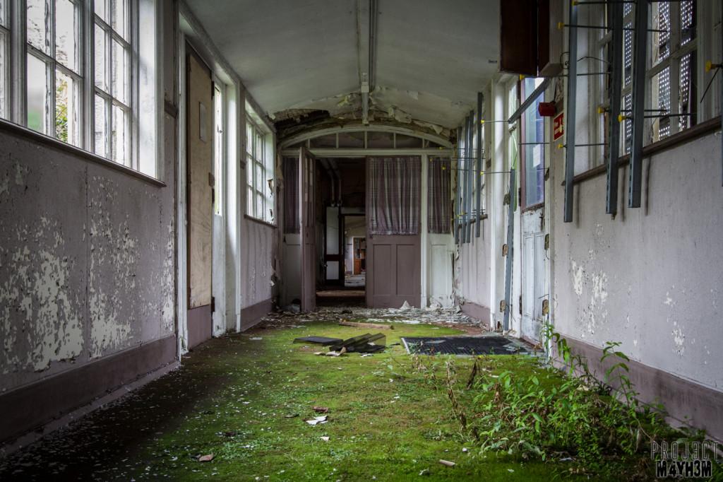 The Unseen Asylum - Green Carpet