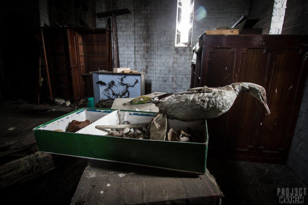 St Joesephs Seminary - Taxidermy Room